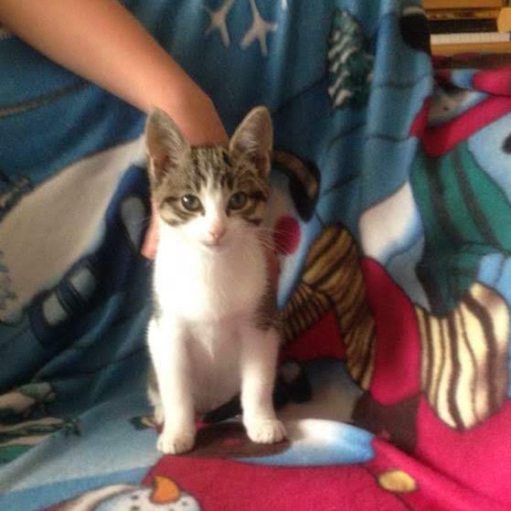 Dibley Kitten 1